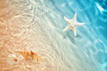 Fototapetastarfish and seashell on the summer beach in sea water.