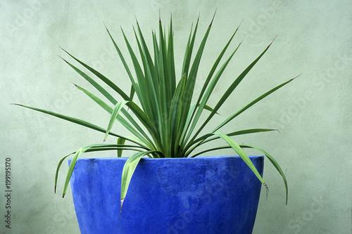 Deurstickers Planten Plant in a blue pot.