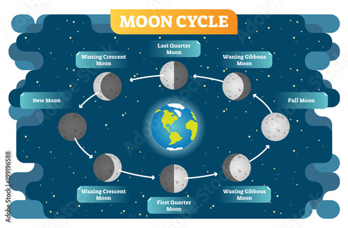 Photo Moon phase cycle vector illustration diagram poster