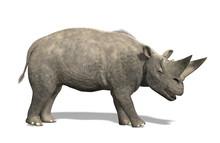 Arsinoitherium - Extinct Mammal