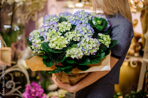Montage in der Fensternische Hortensie Girl holding a beautiful bouquet of blue hydrangea