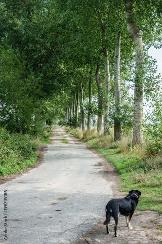 Keuken foto achterwand Olijf Dog on forest path