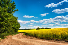 Dirt Road In Colza Flowering F...