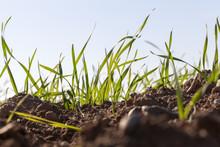 Grass And Soil , Closeup