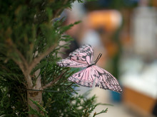 Pink Butterfly Ornament Displa...