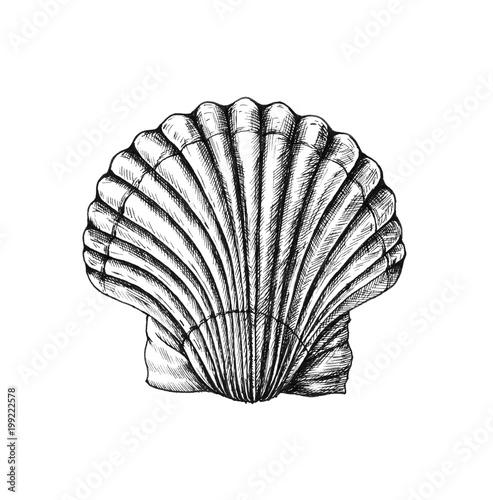 Carta da parati Hand drawn scallop saltwater clams