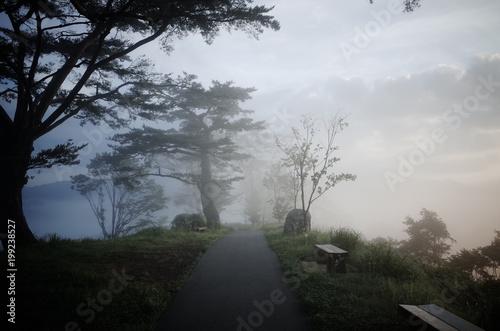 Fototapeta  国見ケ丘の朝霧