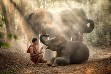 The Elephants In Forest And Ma...