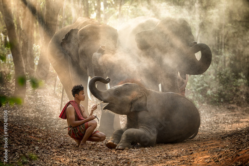 The elephants in forest and mahout with baby elephant  lifestyle of mahout in Chang Village, Surin province Thailand Fototapet