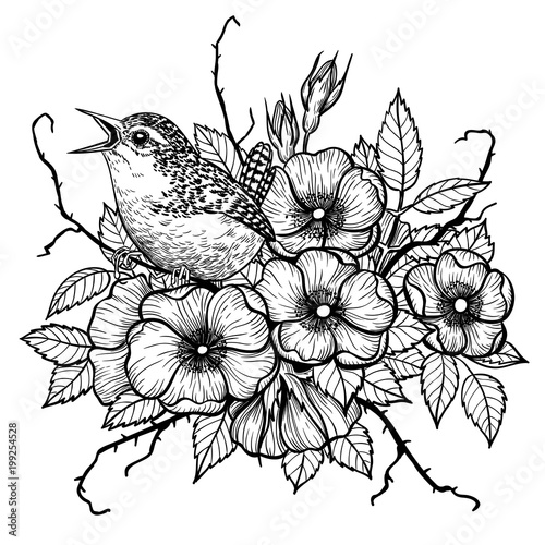 Wren on bouquet of dog rose, hand drawn illustration. Tablou Canvas