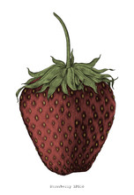 Strawberry Hand Drawing Vintage Engraving Illustration Style