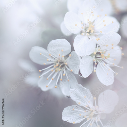 spring soft flowers. Nature