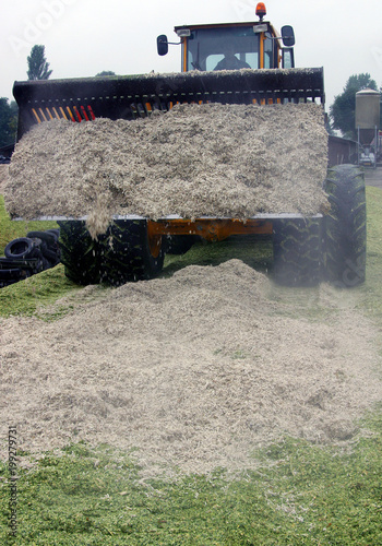 Keuken foto achterwand Olijf Making silage. Food for cows. Brewers grain. Shovel