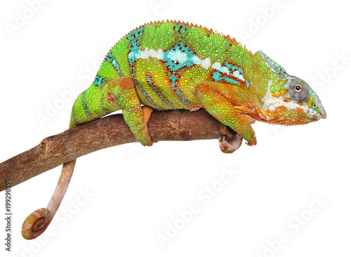 Fotobehang Kameleon Chameleon on branch