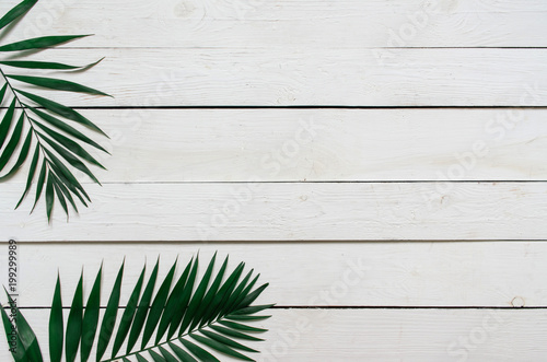 Green flat lay tropical palm leaf branches on white wooden planks background. Room for text, copy, lettering.