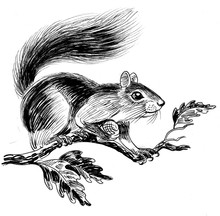 Ink Black And White Drawing Of A Squirrel On A Tree