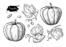 Pumpkin Vector Drawing Set. Is...