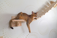 Абиссинская кошка крупным планом на деревянной лестнице, шест, гамак