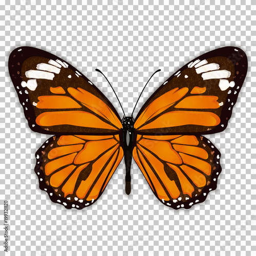 Fotografie, Obraz  Beautiful butterfly with orange wings, view from above, on a transparent background, graphic drawing