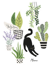 Black Cat And Plants In The Po...