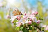 Fototapeta Natura - Frühling 446