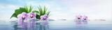 Fototapeta Kwiaty - Orchideen mit Steinen im See - sonnige Stimmung