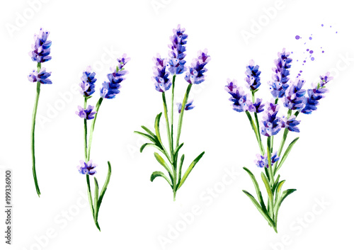 Lavender summer bouquet collection. Watercolor hand drawn vertical illustration, isolated on white background