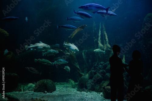Plakat Dwie osoby obserwujące ogromne akwarium