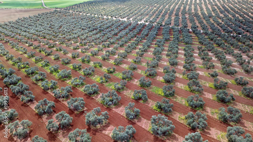 Photo Fuente Piedra Olive trees