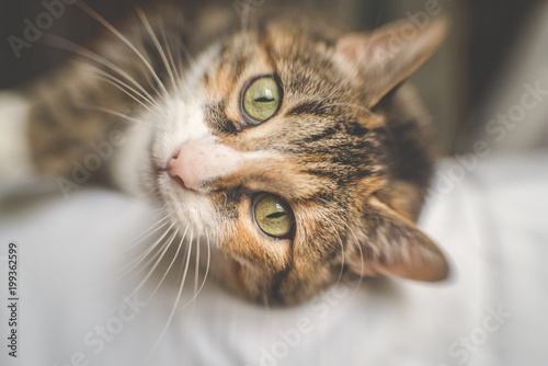 Close-up portrait of cat relaxing on bed at home