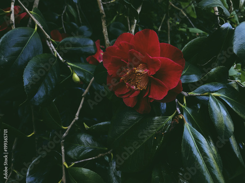 Foto op Canvas Bloemen Close-up of red flower blooming amidst plants
