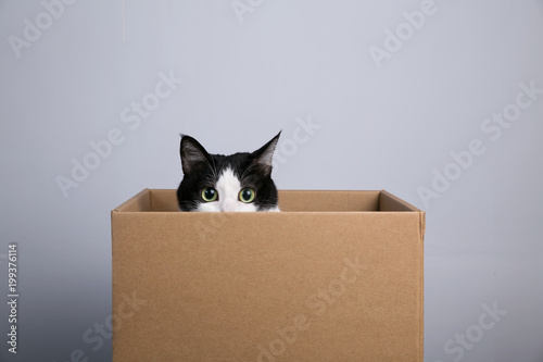 Fotobehang Kat cardboard box with a cat