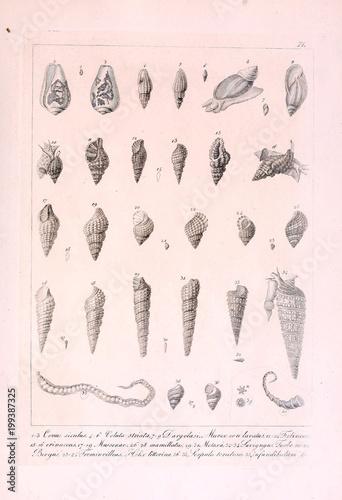 Fototapeta Illustration of animal obraz na płótnie