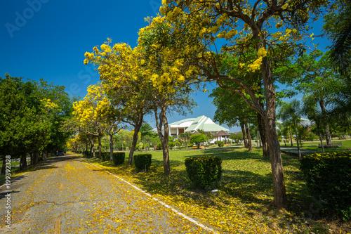Plakat Złoty tubowy drzewo przy parkiem wewnątrz na niebieskiego nieba tle.