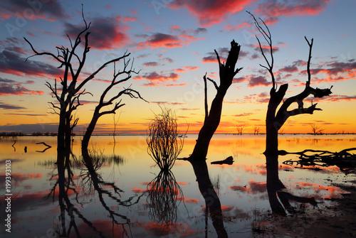 Valokuvatapetti Old gnarly trees on the lake at sunset