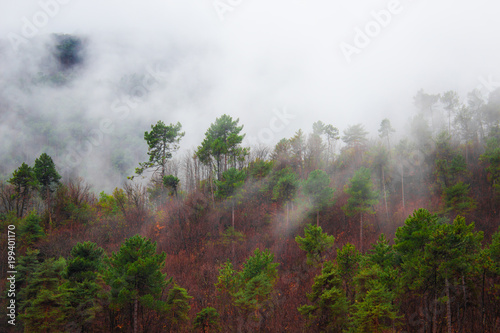 mgla-w-gorach-wsrod-drzew