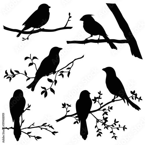 Fotografia birds on branches silhouette set