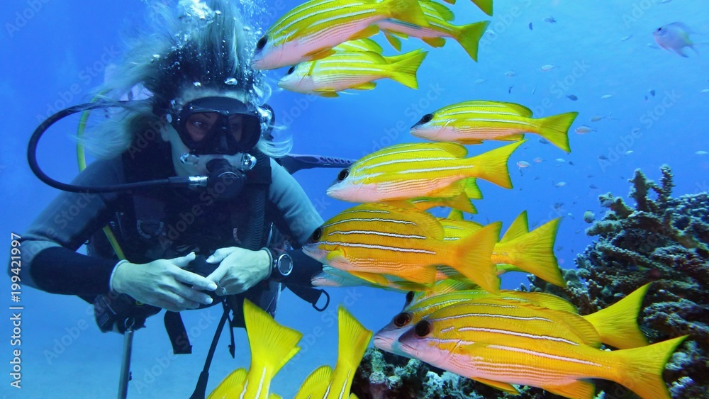 Fototapeta Woman scuba diver and shoal of yellow coral fish