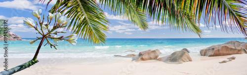 frangipanier et cocotiers sur plage des Seychelles