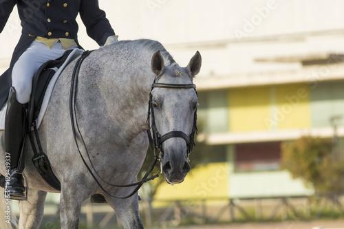 Fotografie, Obraz  Un caballo español ha terminado su participación en una competición de doma clas