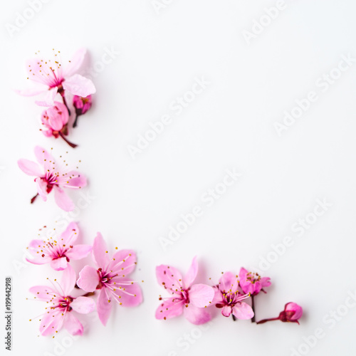 Vivid pnk cherry blossom on white background. Negative space. Fototapete