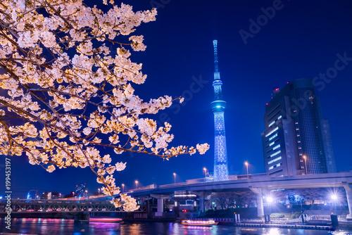 Photo 浅草 墨田公園の夜桜とライトアップされたタワー