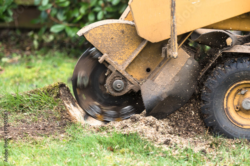 Photo  Stump grinder in action