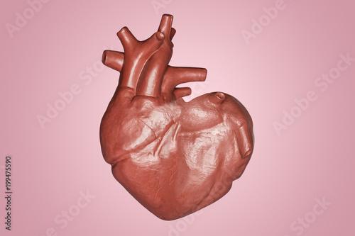 A Human Heart In A Heart Shape Part Of Anatomy Human Body Model