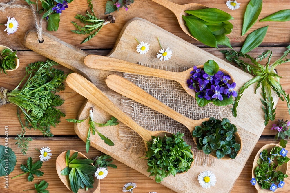Fototapety, obrazy: Wild edible spring herbs on wooden spoons
