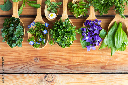 Fotografie, Obraz  Wild edible spring herbs on wooden spoons