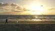 Seagulls on Beach at Sunset Tracking Shot
