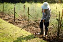 Farmer Working In The Garden A...