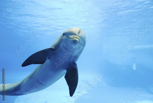 Photo sur Aluminium Dauphin Dolphin