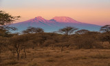 Fototapeta Sawanna - Kilimanjaro im Morgenlicht